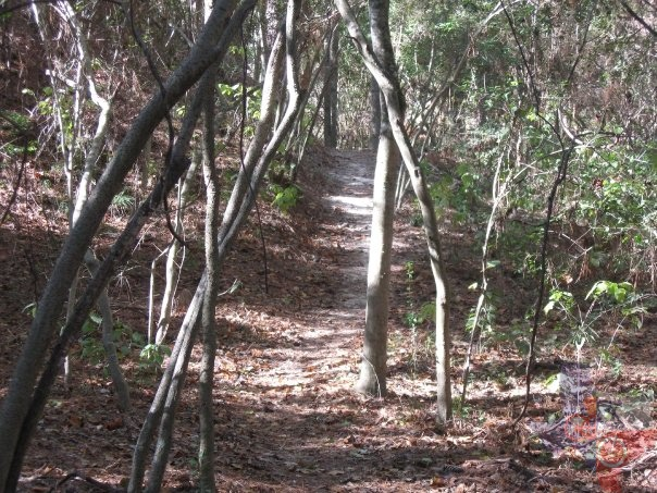MountainBikeTx.com | Trails | Gulf Coast | Cypress Creek ...